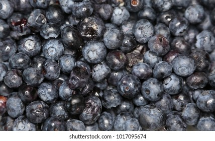 old rotting and moldy blue berries. most downloaded blue berry