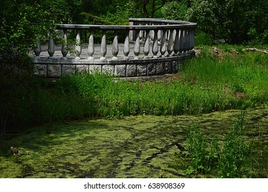 Old round stone balustrade in marshy part of arboretum, with cane and other wetland plants visible. Small blackbird in left bottom corner.