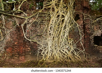 Old ruined building covered with aerial roots (prop roots) of a banyan tree. Network of roots.