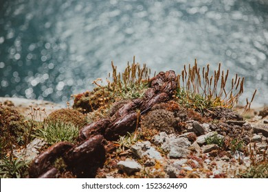 Old rusted chain consumed by sea salt and time