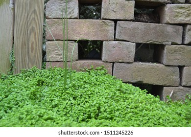 Old rustic brick wall, nature wall, and timber, wooden post, with tuft of grass and green plant, ground cover, at the bottom