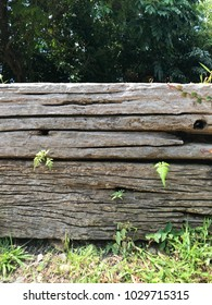 Old rustic wooden wall with ferns growing along the gaps.