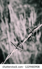 Old rusty barbed wire, close up. Electrified fence with barbed wire. Restricted area, jail prison terror, concept.