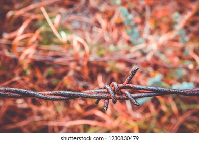 Old rusty barbed wire, close up. Electrified fence with barbed wire. Restricted area concept, autumn grass .