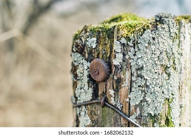 An old rusty bottle cap screwed to a very old moss covered post in the forest.