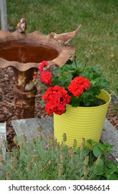 Old rusty metal birdbath and flowerpot full of red geraniums
