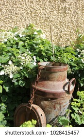 Old rusty milk can against a plastered beige wall, surrounded by a white hibiscus plant, as garden design.