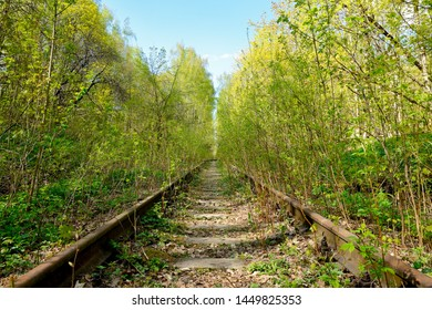 Old rusty rails of an abandoned railway. View into the distance. Rails overgrown with grass, bushes. Concept of abandonment, the victory of nature over industry