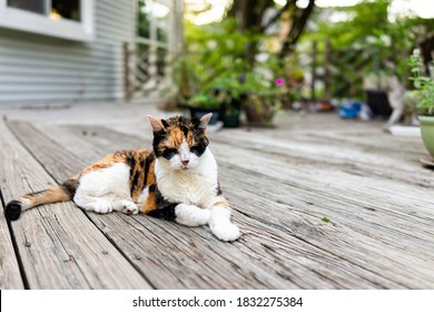 Old sad senior calico cat lying down on wooden deck terrace patio in outdoor garden of house on floor with eyes closed