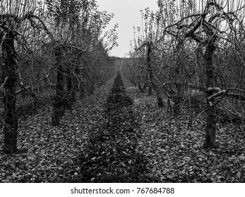 old scary Orchard