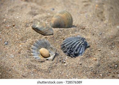 Old seashells on sand with pebble instead of pearl