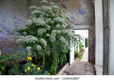 Old Shabby Conservatory Interior