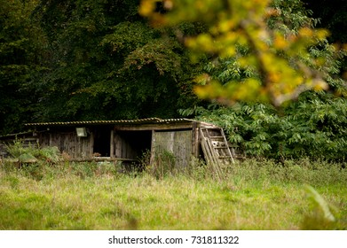 old shed in woods run down in autumn leaves