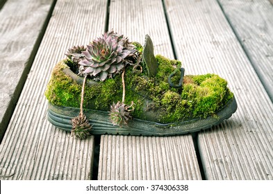 Old shoe covered with moss