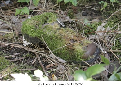 Old shoe covered with moss in the grass