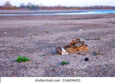 Old Shoe on River Sandbar