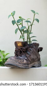 Old shoe with plant on white wall background vertical shot