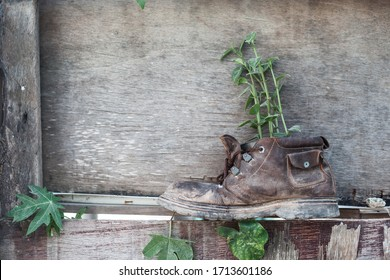 Old shoe with plant on the wooden wall background