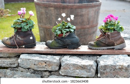 old shoes used as flower stands