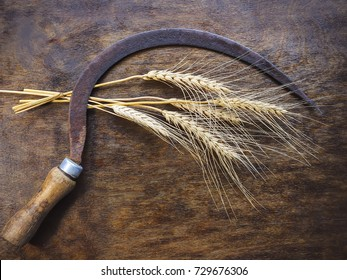old sickle and ears of wheat on a wooden board.
