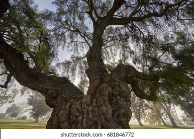 old silent tree in the park