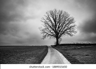 an old single tree on the top of a small hill, BW