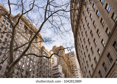 Old skyscaper building through the branches or leafless trees, up view, Lower Manhattan, New York, USA
