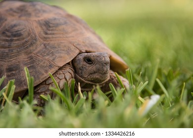 old small tortoise