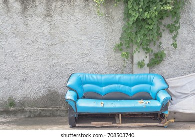 Old sofa with wall have vine hanging
