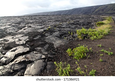 An old solidified lava field begins to re-generate with small plants which grow in the crevices between the lava.