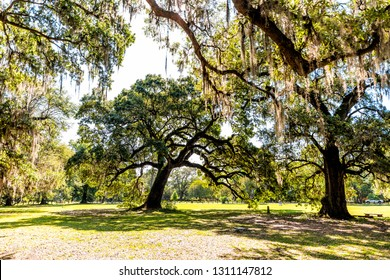 Old southern live oak trees in New Orleans Audubon park on sunny spring day with benches and hanging spanish moss in Garden District