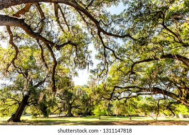 Old southern live oak trees in New Orleans Audubon park on sunny spring day with benches and hanging spanish moss and green Tree of Life in Garden District