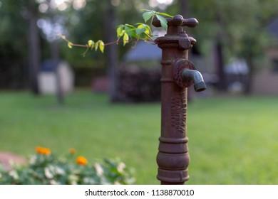 An old spigot in the flower garden