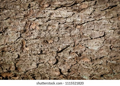 old spruce bark texture for the background