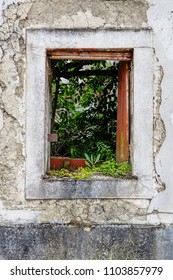 Old Stained Window taken by plants