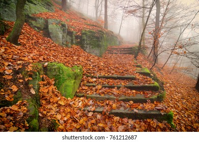 Old stairs of the forest path