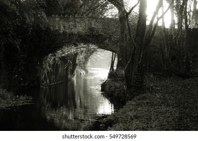 Old stone bridge in the winter, overgrown with ivy. Sunshine at back. Black and white.