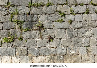 Old stone castle wall made of stone brick slabs. Ancient medieval fortified wall fence with green grass and moss texture pattern.