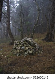 Old stone draw well in spooky foggy forest with brown pine needle forest floor portrait