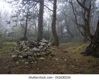 Old stone draw well in spooky foggy forest landscape