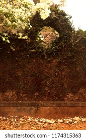Old stone fence with a curly plants. Gokarna, Carnataka, India