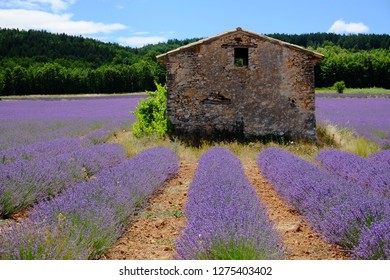 Old stone house on beautiful lavender fields, Provence, France