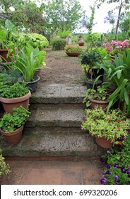 Old stone steps in small italian garden, decorated by flower pots, Italy