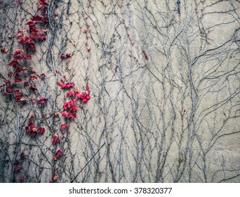 Old stone wall covered vegetation. Photo Background.