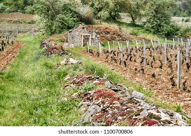 An old stone wall crumbles near an old stone farm building amidst the grand cru and premier cru vineyards near Gevrey-Chambertin in the Burgundy region of France.