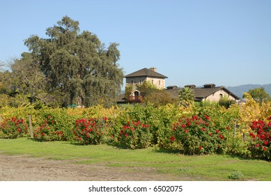 Old stone winery, St. Helena, California