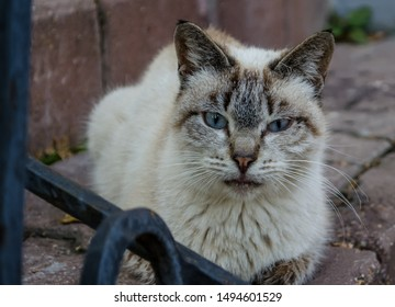 Grumpy+cat Stock Photos, Images & Photography | Shutterstock