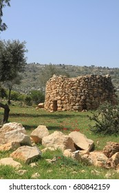 """An old structure called """"Qasir"""" used by farmers during the olive picking season in Palestine. The photo is from the olive groves surrounding Ramallah, Palestine."""