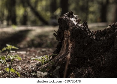 Old stump in the forest on a summer day with green grass