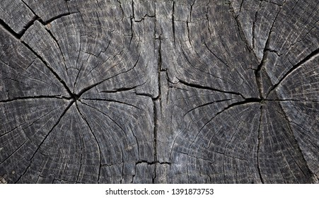 Old stump. Wood texture of cut tree trunk, wooden board with cracked.  Close-up background.